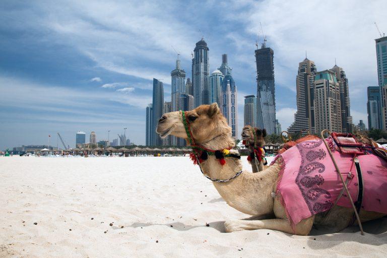 Découverte lors d'un séjour culturel à Dubaï