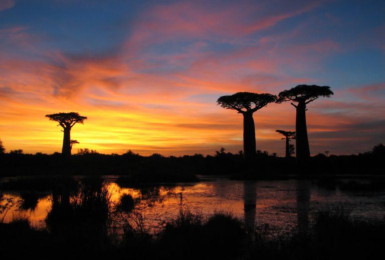 Séjour de rêve au pays des lémuriens