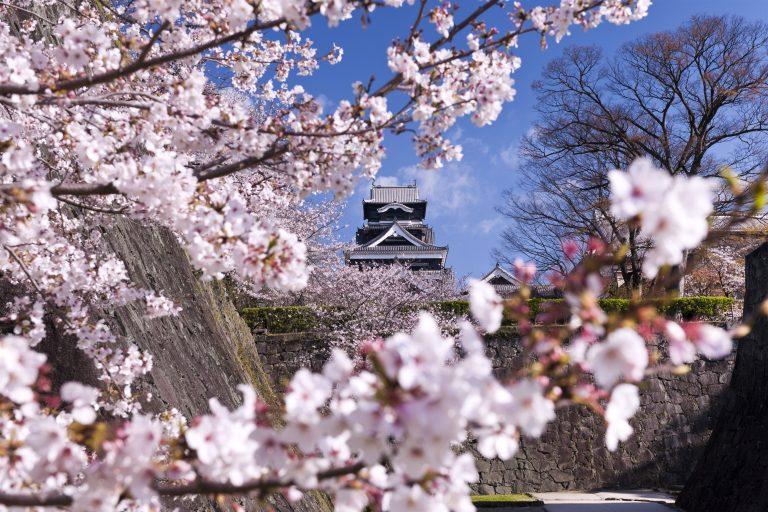Les cerisiers en fleurs au Japon : à découvrir absolument !