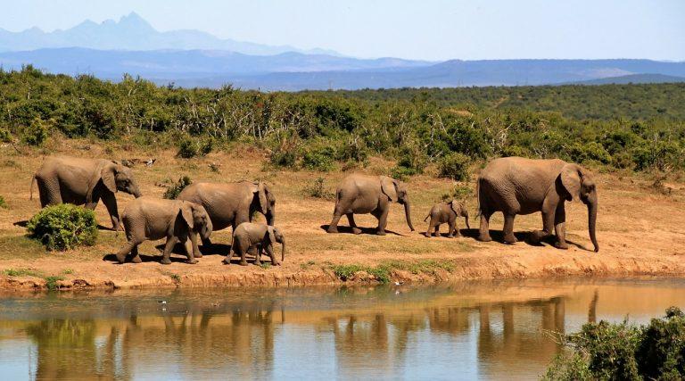 Que faire lors d'un séjour en Afrique du Sud ?